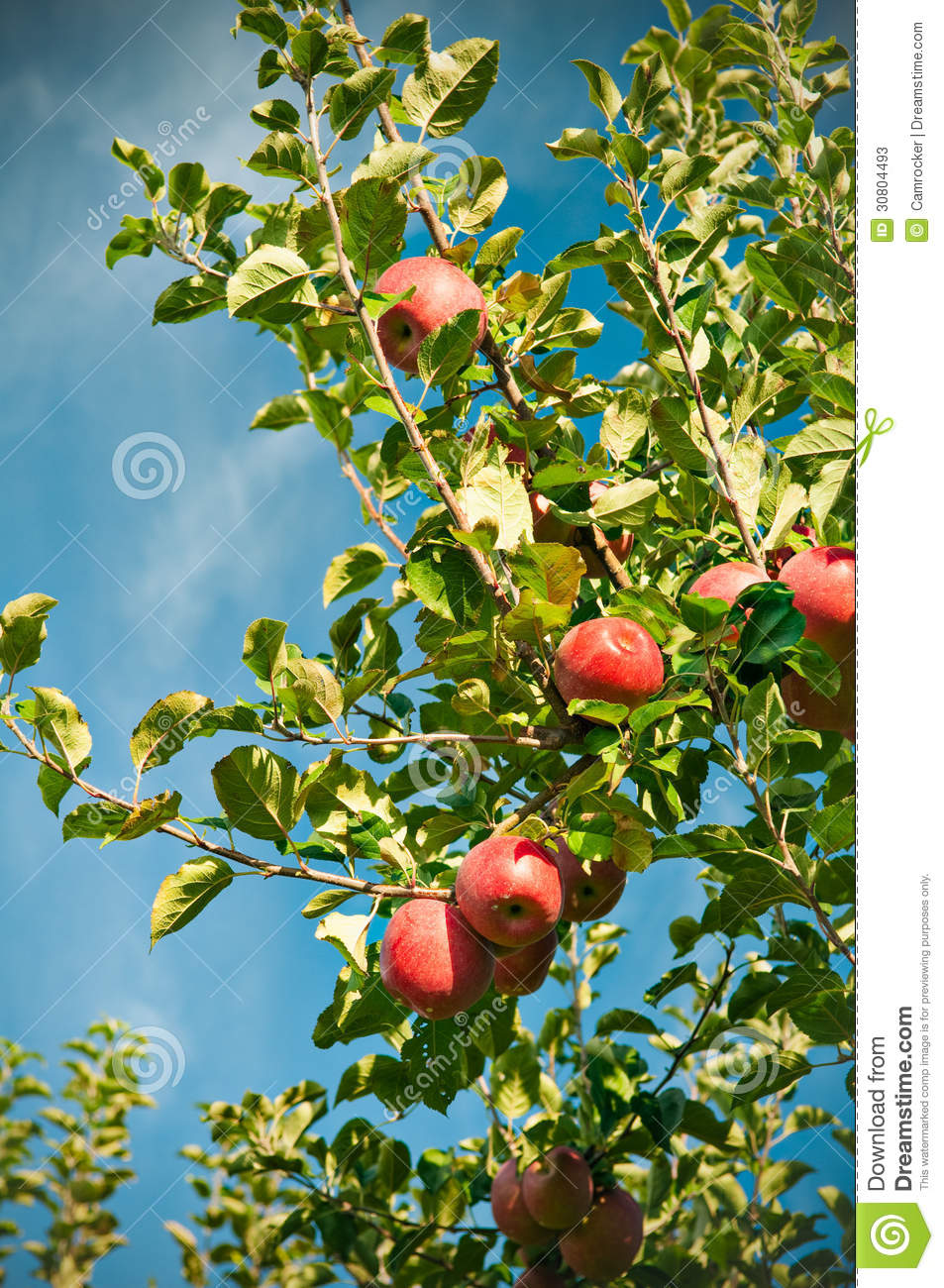 apple orchard business plan