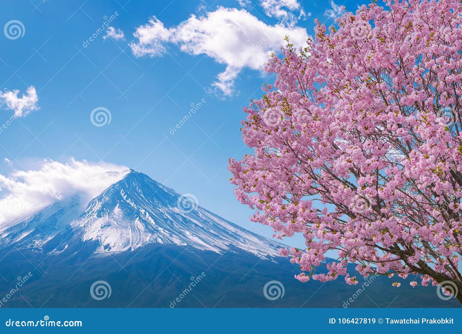Fuji berg och körsbärsröda blomningar i våren, Japan