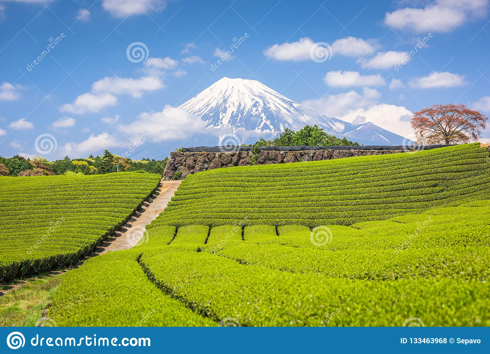 Fuji, Japón en el Mt Fuji y campos del té
