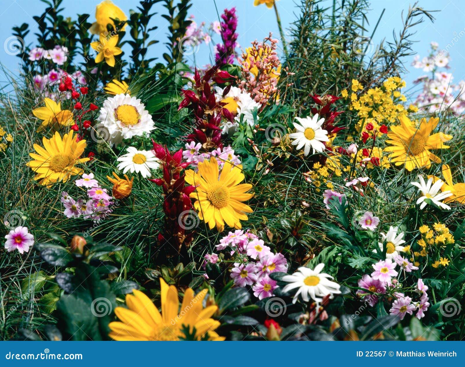 Full äng för blommor