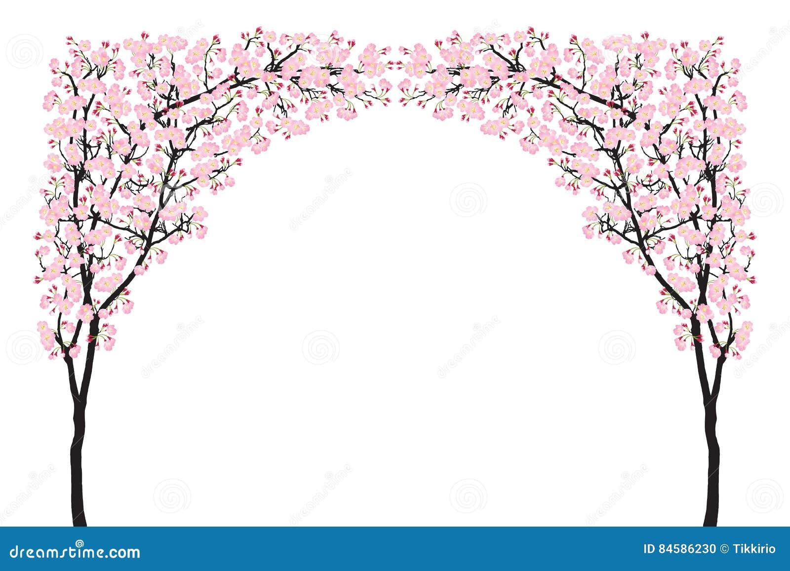 Full Bloom Pink Sakura Tree Arch Cherry Blossom Curve