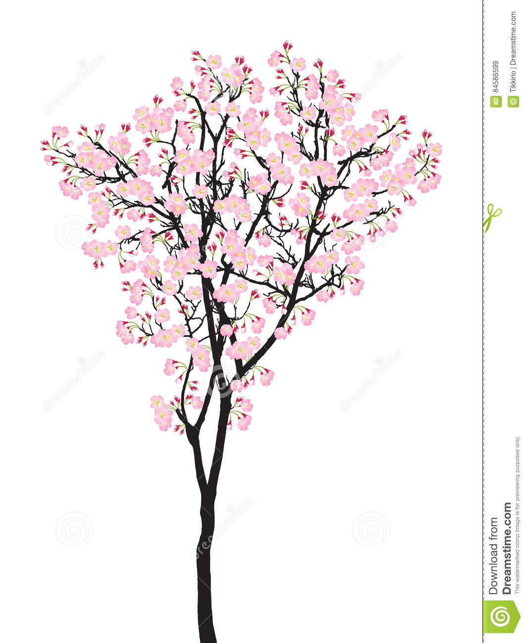 Cherry Blossom Tree Black And White: Full Bloom Pink Sakura Tree Cherry Blossom Black Wood