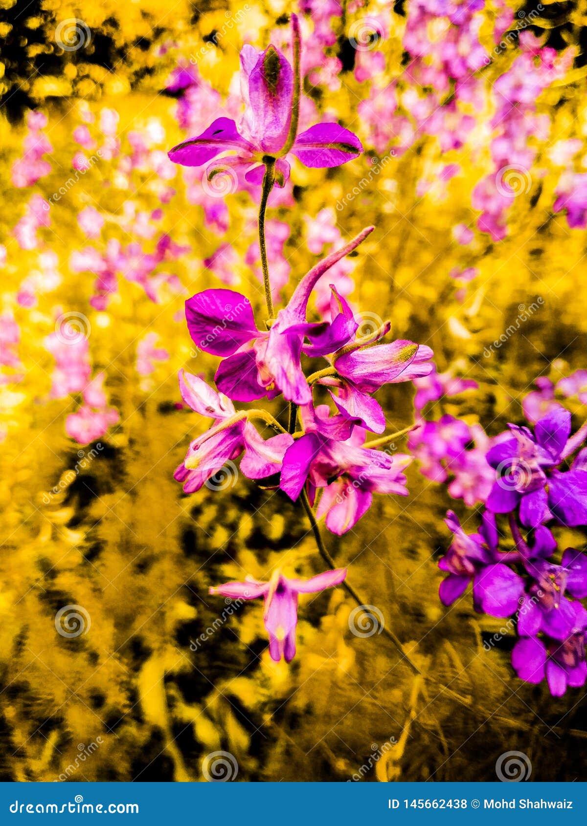Full Hd Flower Wallpaper Stock Photo Image Of Hdflower 145662438