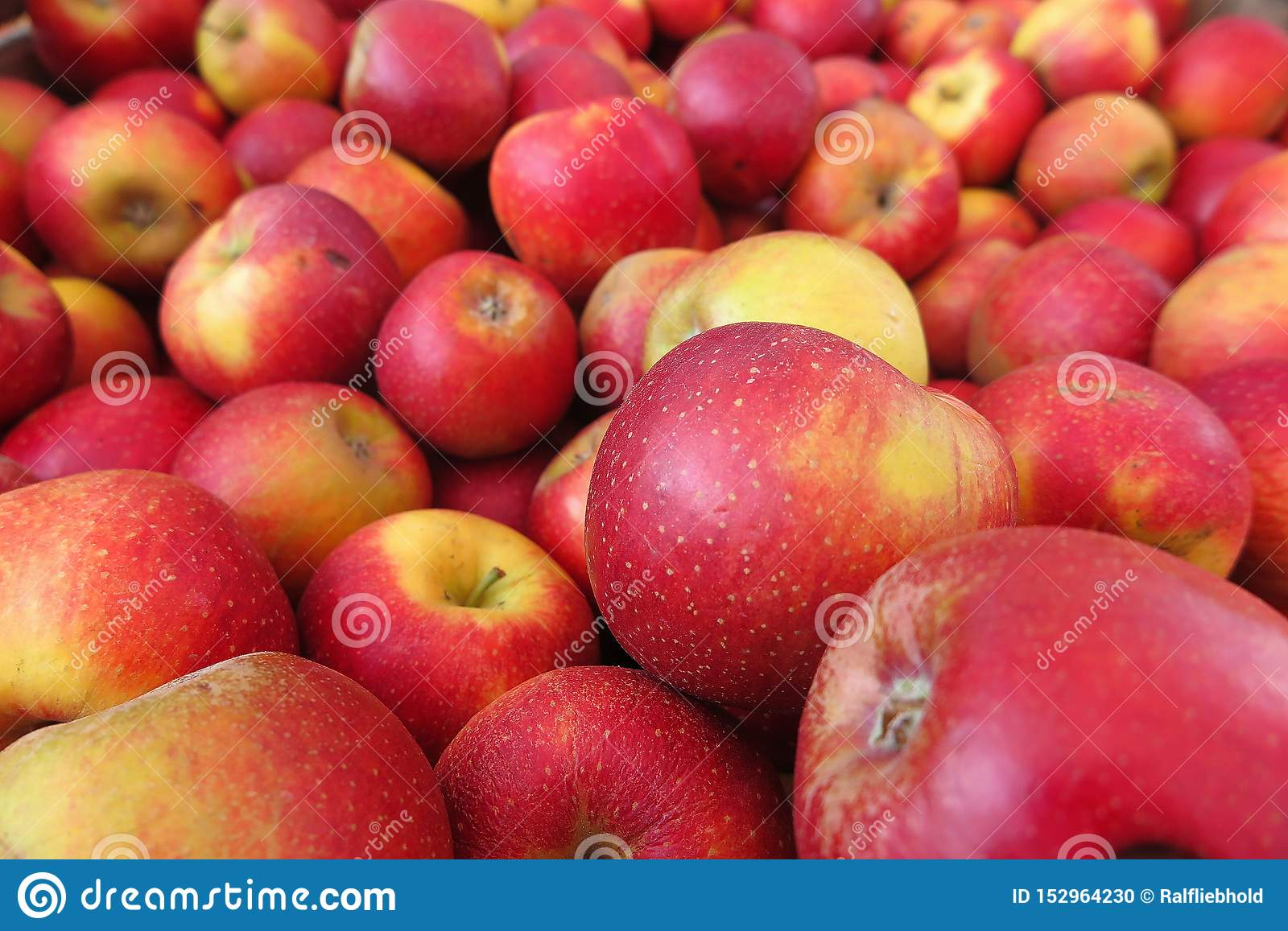 Full frame close up of pile red yellow apples wellant