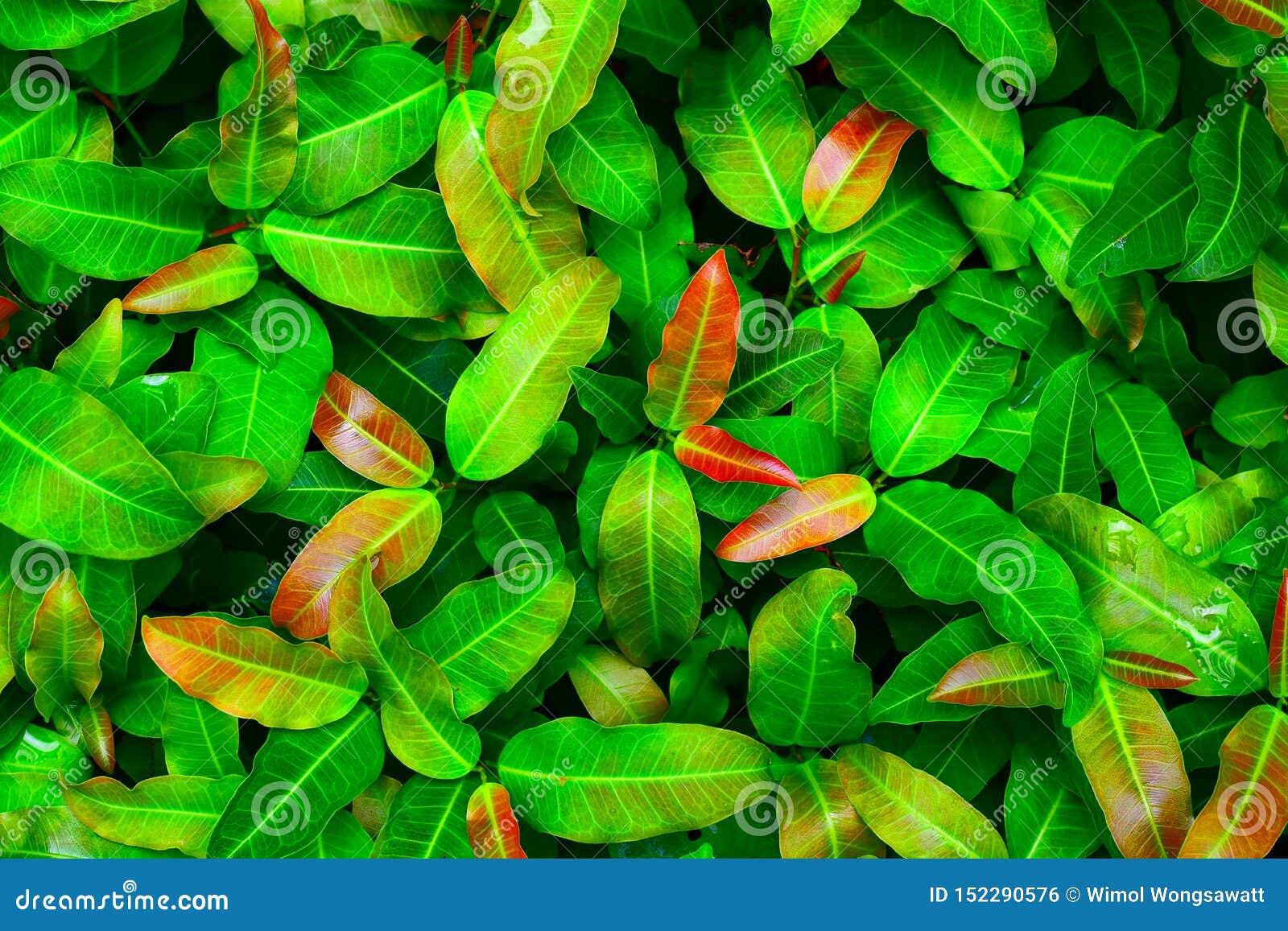 Full frame green leaf nature for background