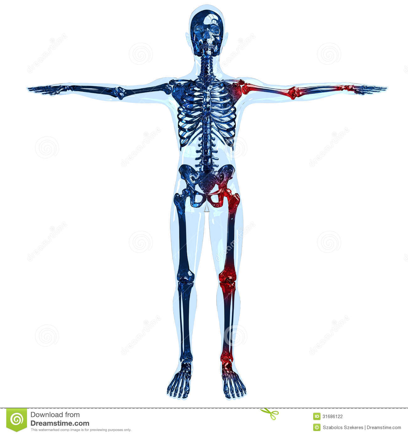 Full Human Glass Skeleton 3D Concept With Joint Pa Stock ...