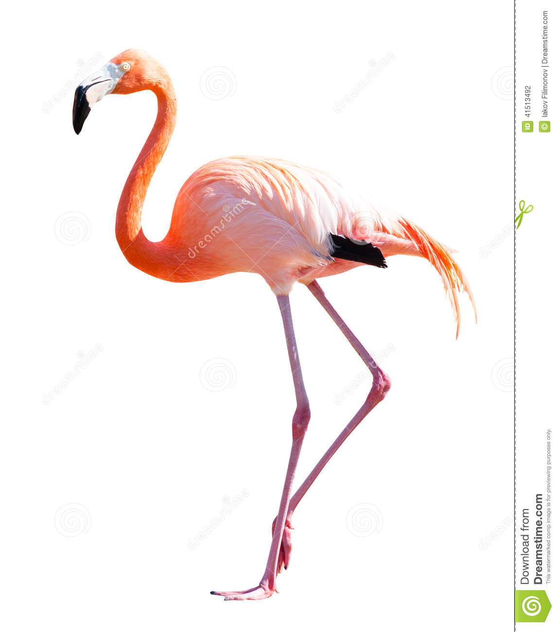 full length of flamingo over white stock photo image lotus clip art black and white lotus clipart images