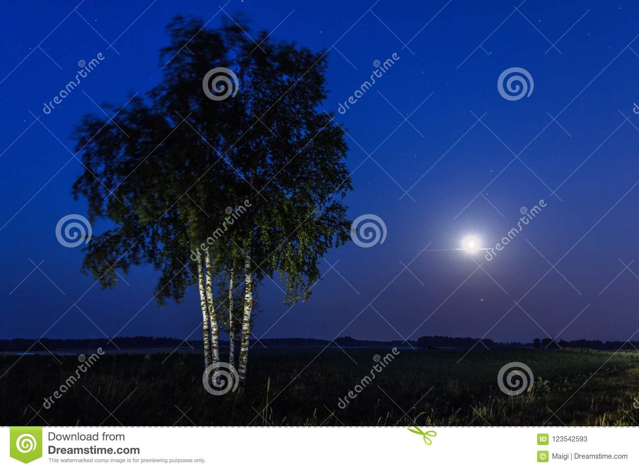 Download Full moon and birch trees stock image. Image of night - 123542593