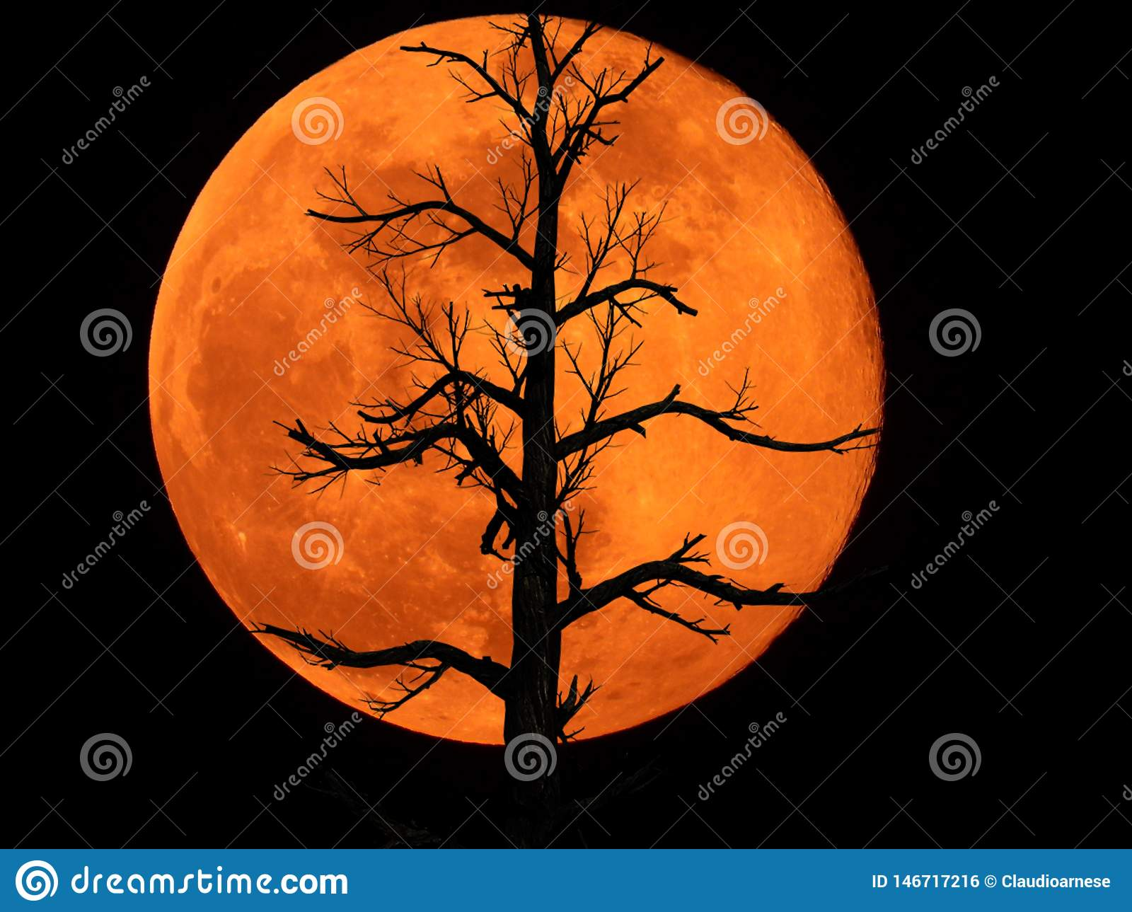 Full Moon with Dead Plant