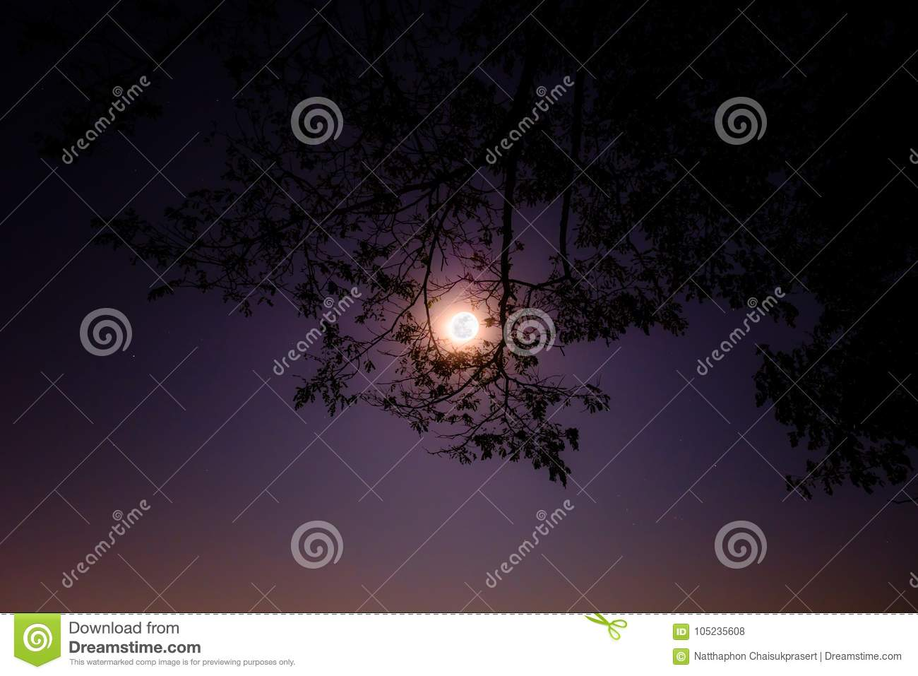 full moon shine bright through frame of tree in the night nice