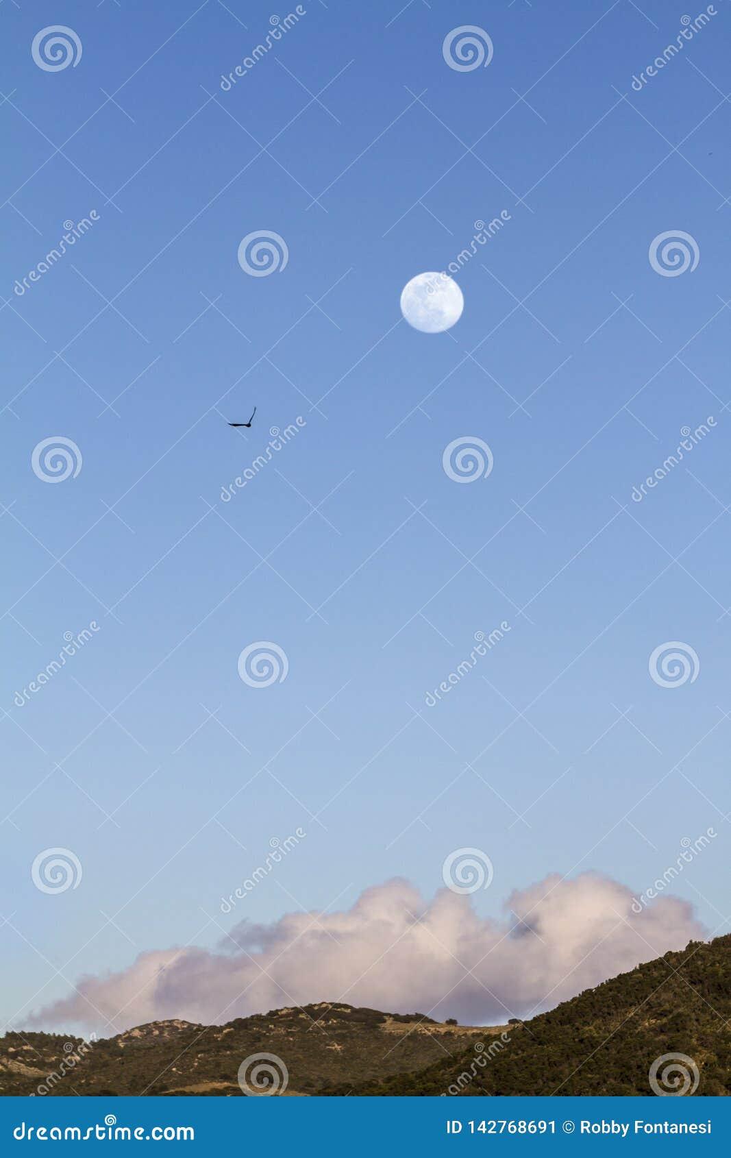 Fullmåne i den blåa himlen för skymningtid utom fara med ett moln som vilar på kullen under och konturn av en peregrine