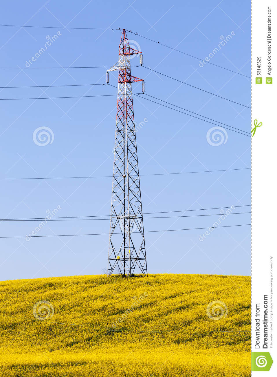 Fully flowered yellow meadow, electricity pylon & blue sky. Spring energy