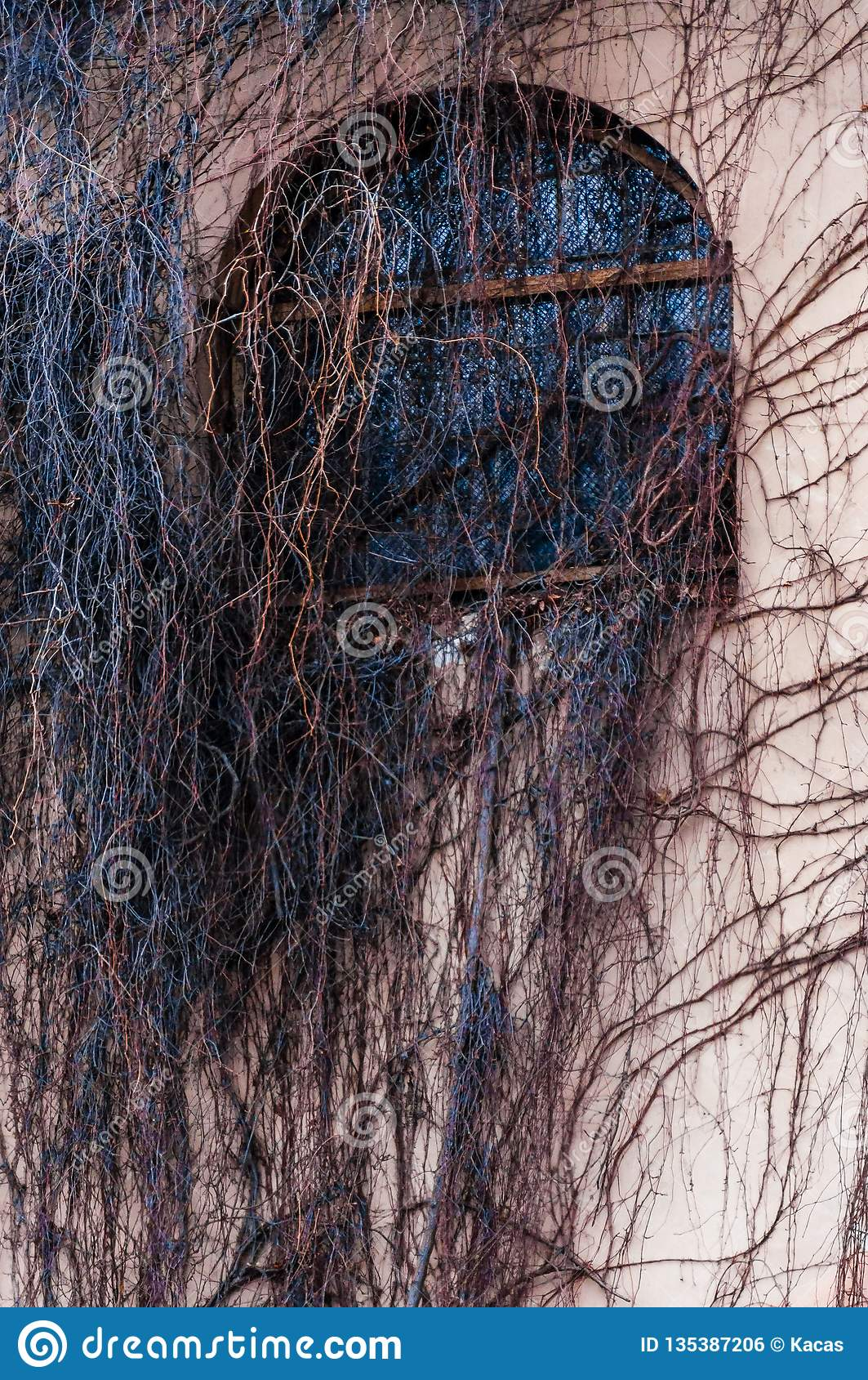 Fully overgrown facade arch window with wild vine, grape plant. Spooky bare branches covering the house wall