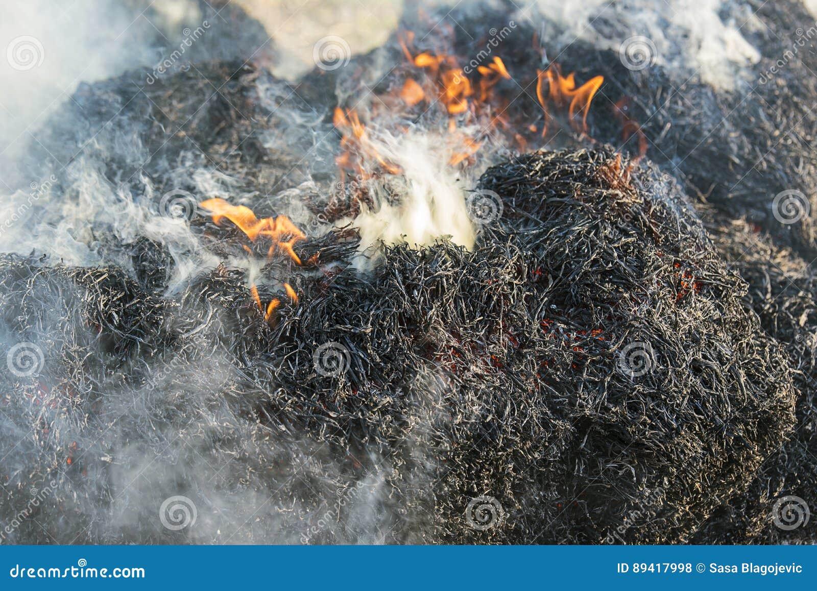 Fumo do fogo