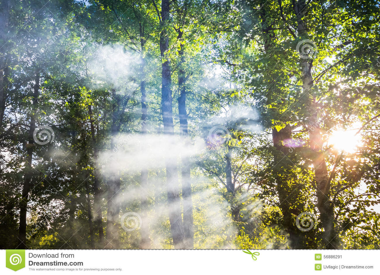 Fumo nella foresta
