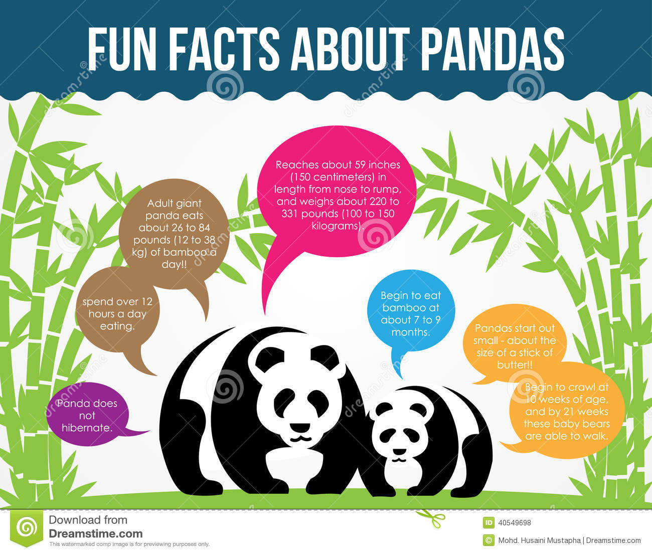 Fun Facts About Pandas. Flat Infographic Vector Stock Vector - Image ...