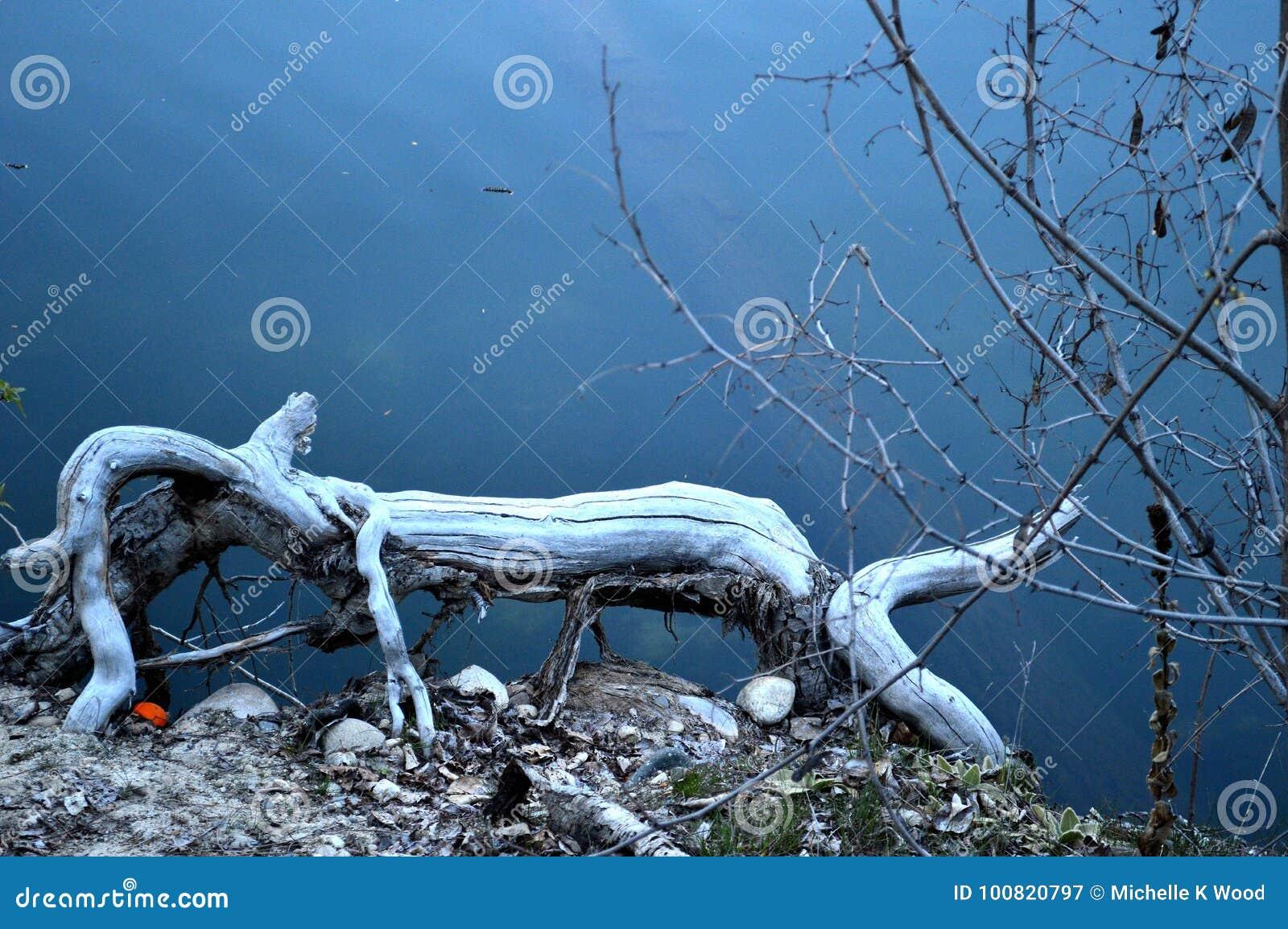 Whimsical log animal in the lake