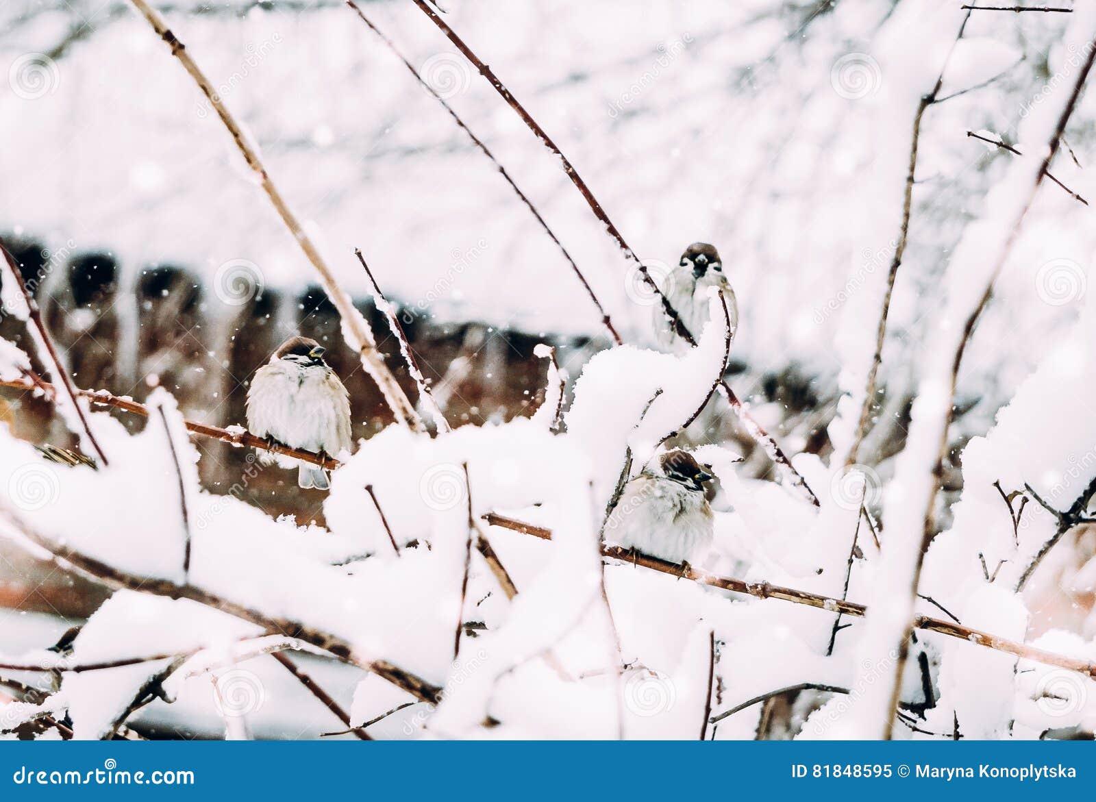 fun in the snow a flock of sparrows in winter garden stock photo