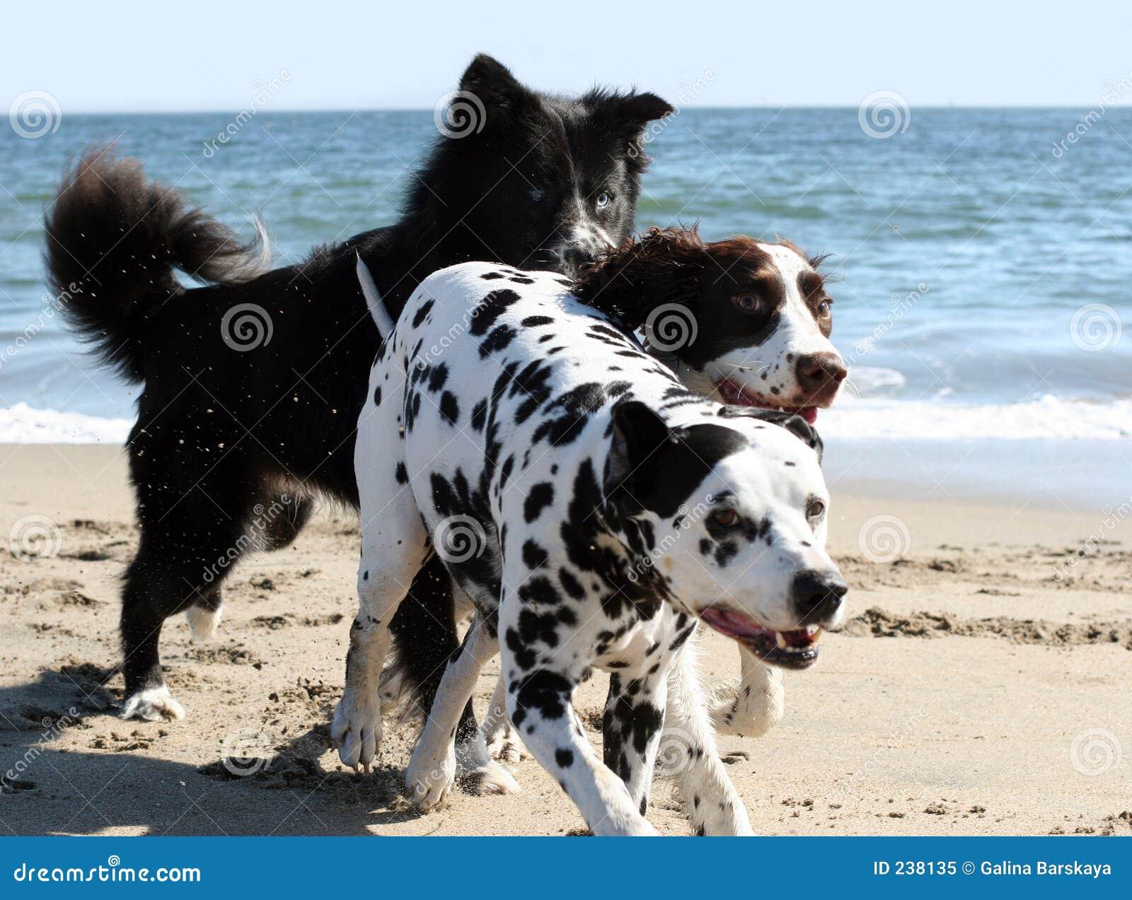 Funcionamento de 3 cães