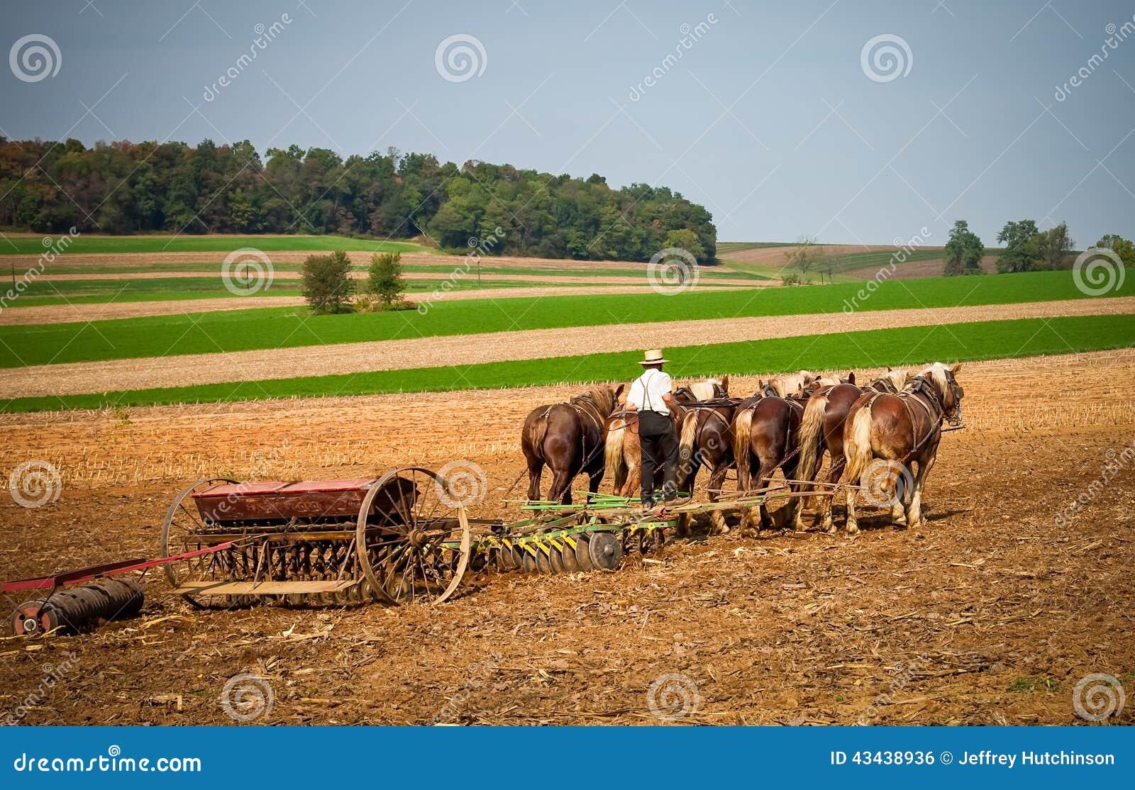 Funcionamento de Amish