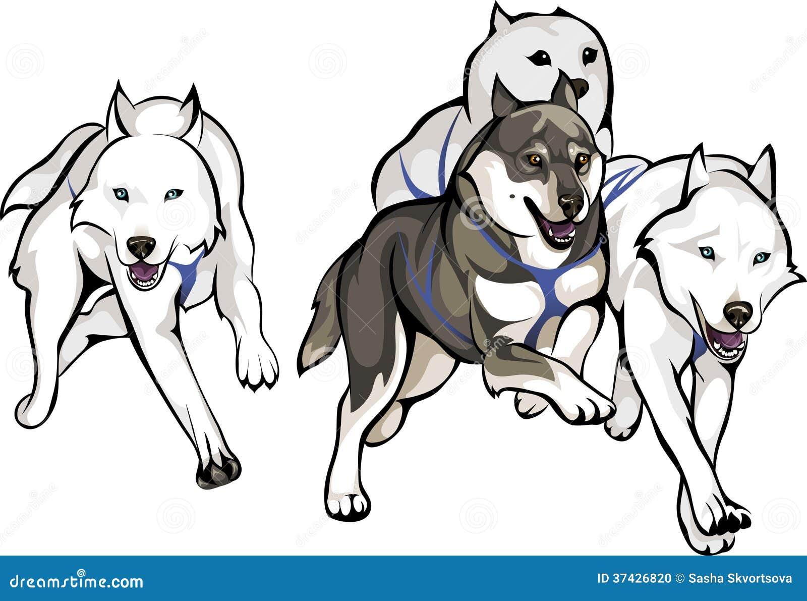 Funcionamiento de los perros de trineo