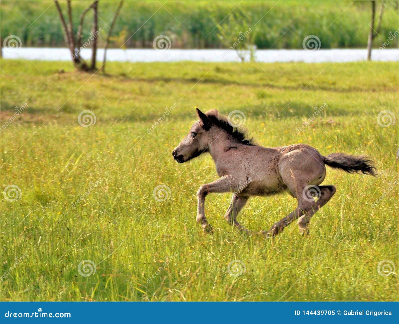 Funcionamiento del caballo en el campo