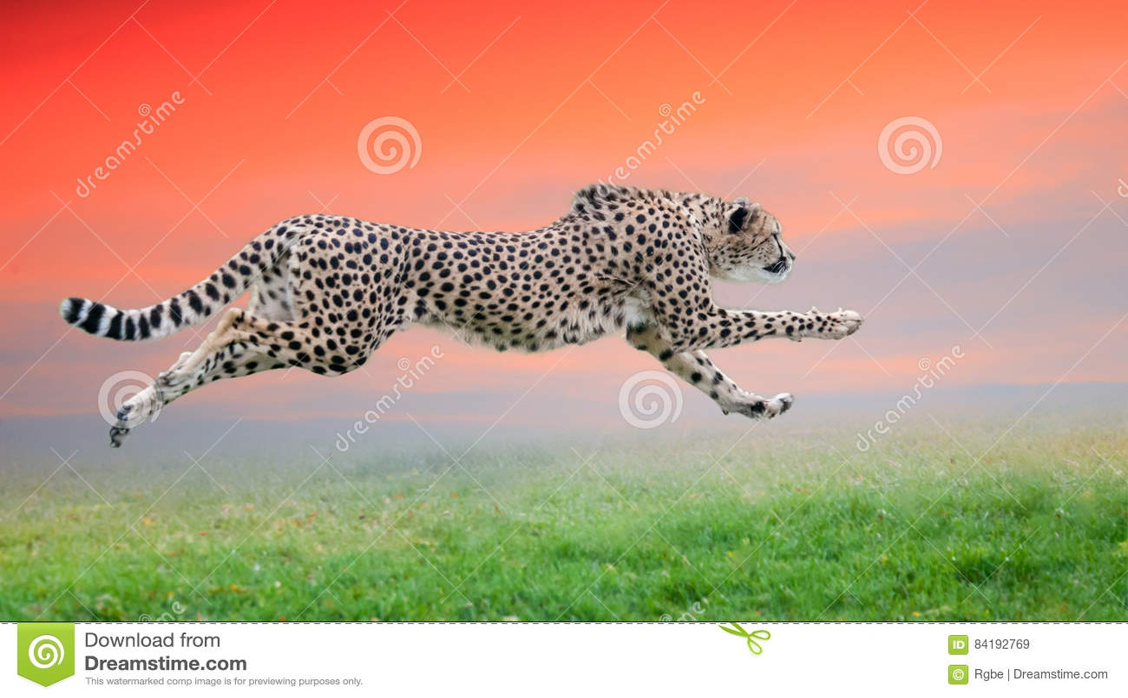 Funcionamiento del guepardo