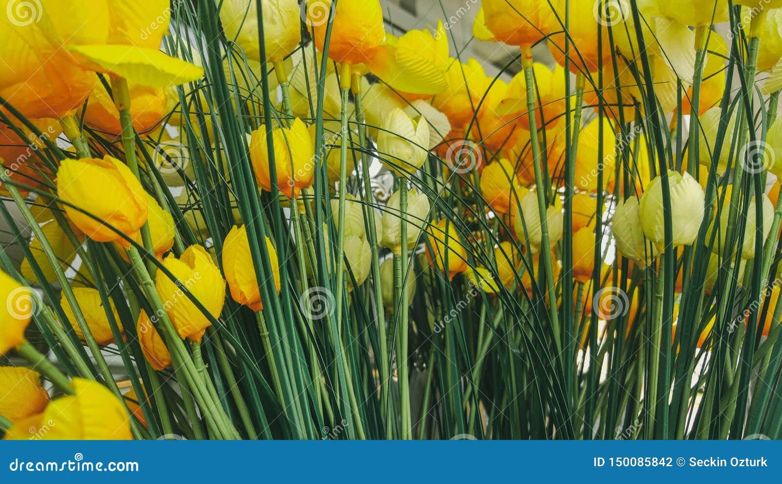 Fundo amarelo das flores da tulipa no escritório