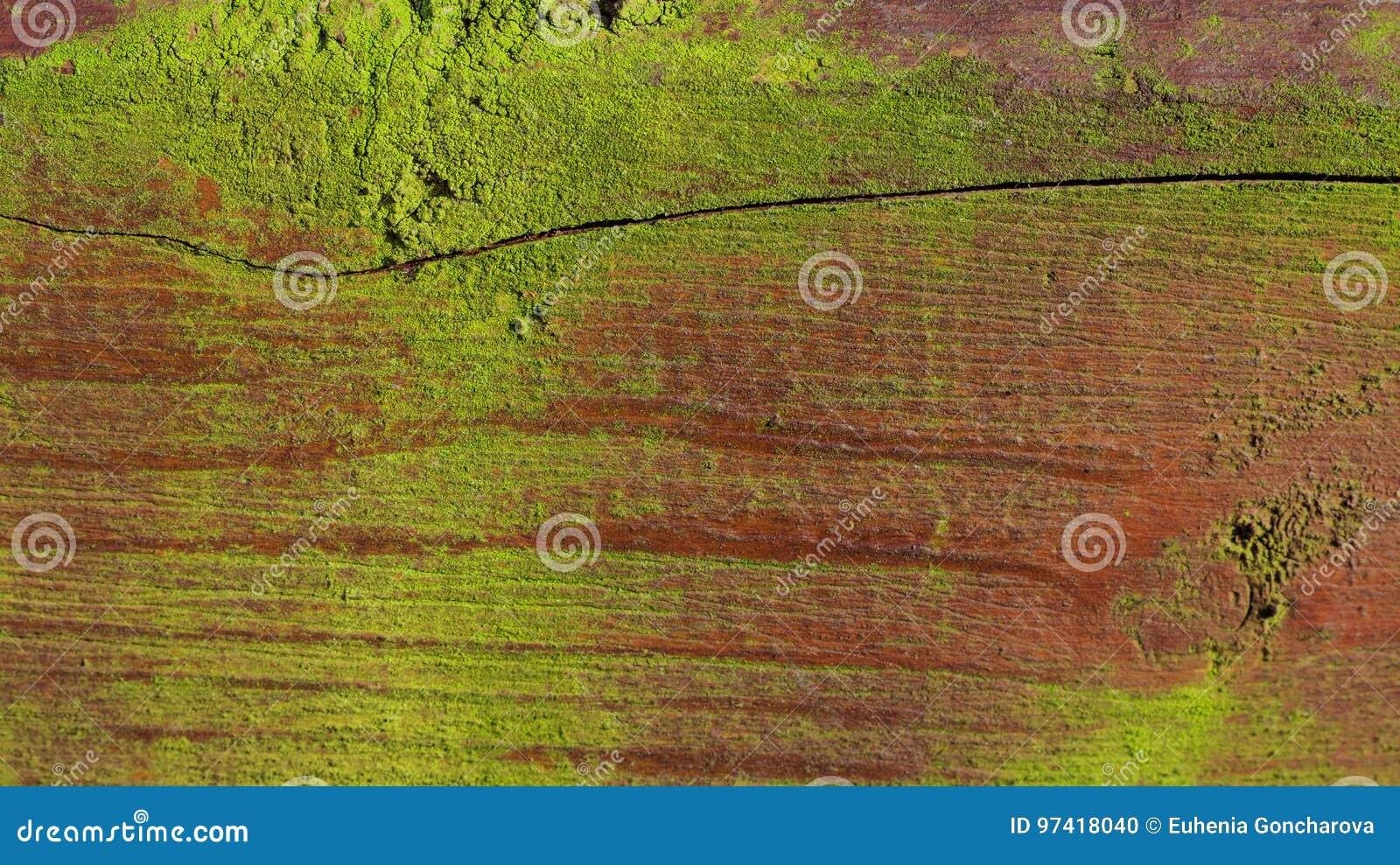 Fundo arborizado do musgo velho