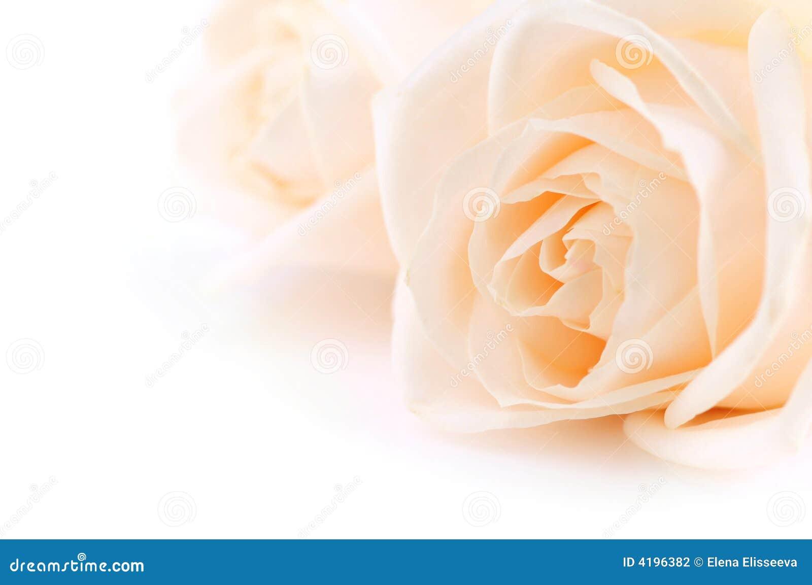 Fundo bege das rosas