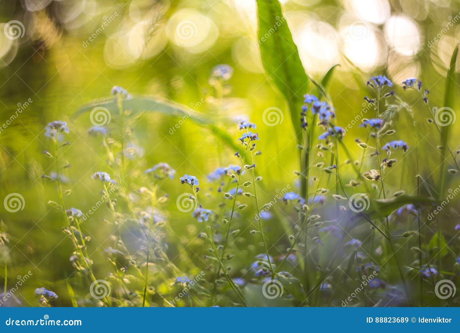 Fundo borrado brilhante abstrato com mola e verão com as flores e as plantas azuis pequenas Com bokeh bonito na luz solar
