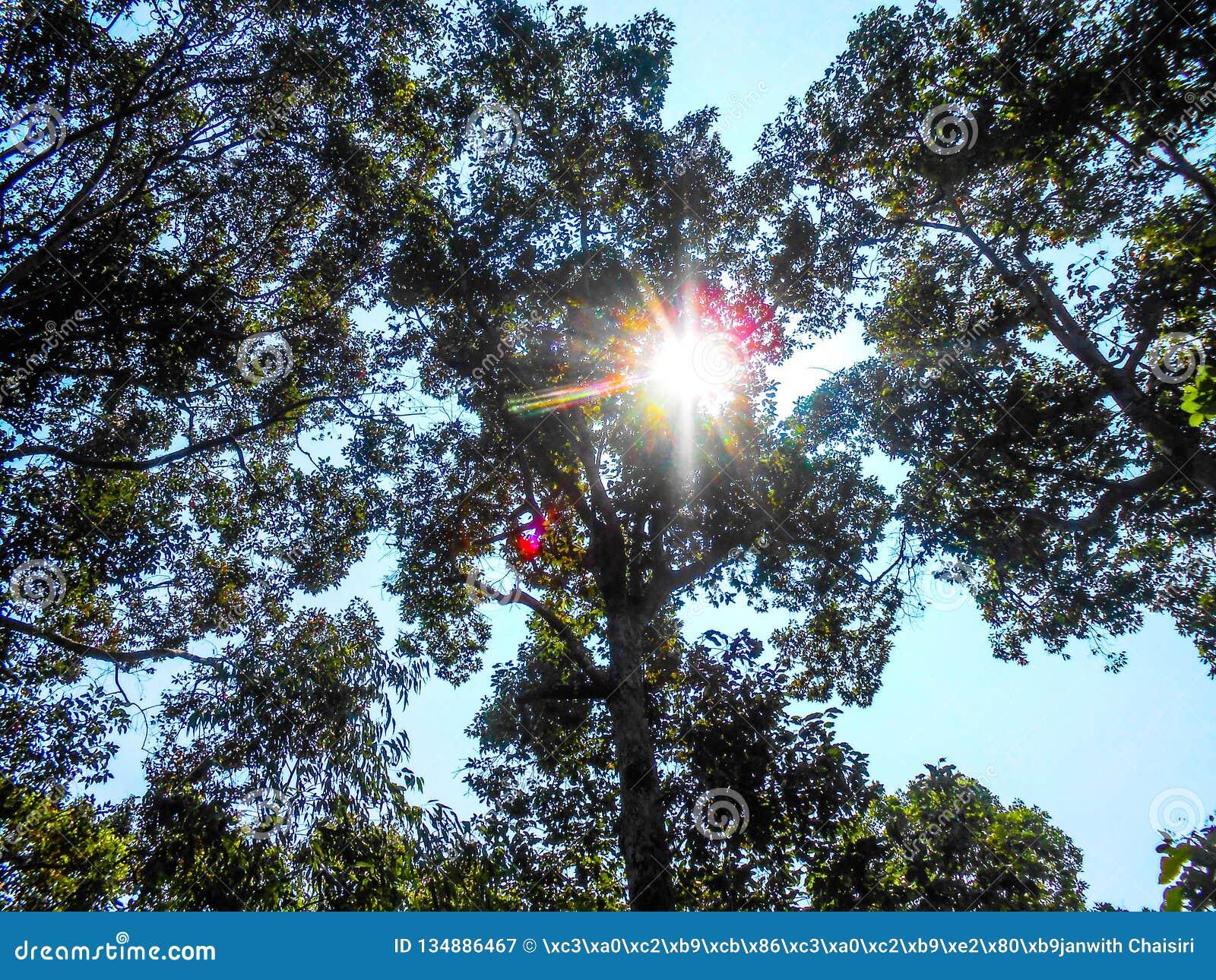 Fundo borrado do conceito da esperança da luz do céu sumário dourado da natureza