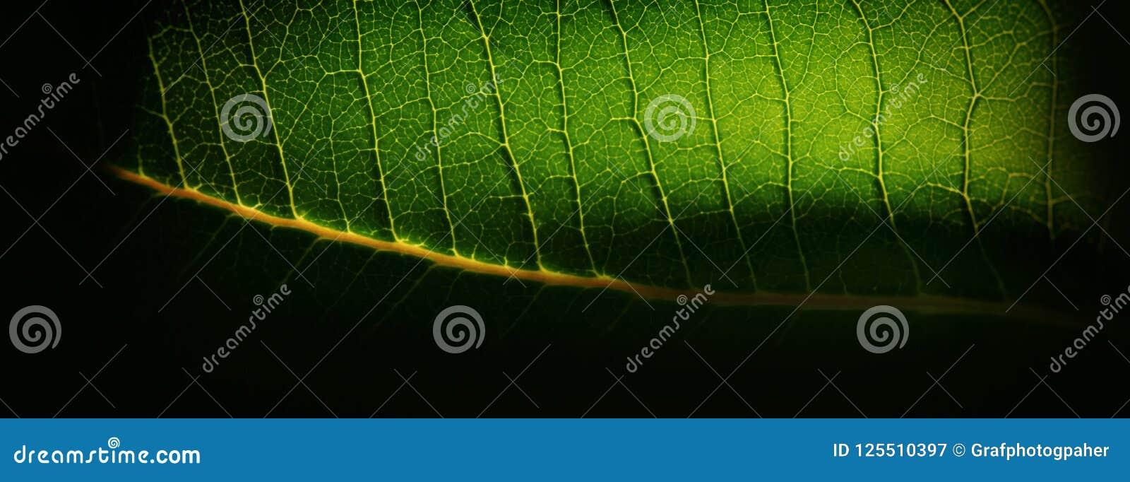 Fundo borrado, folha da planta verde e capilares amarelos web
