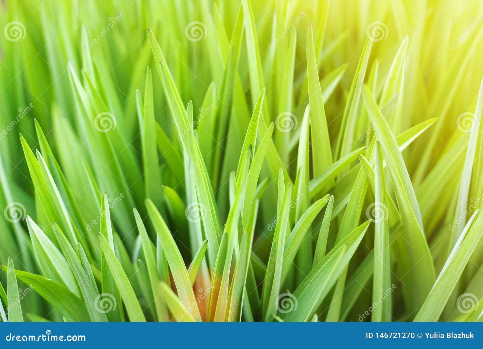 Fundo borrado natural do verde ensolarado do sum?rio