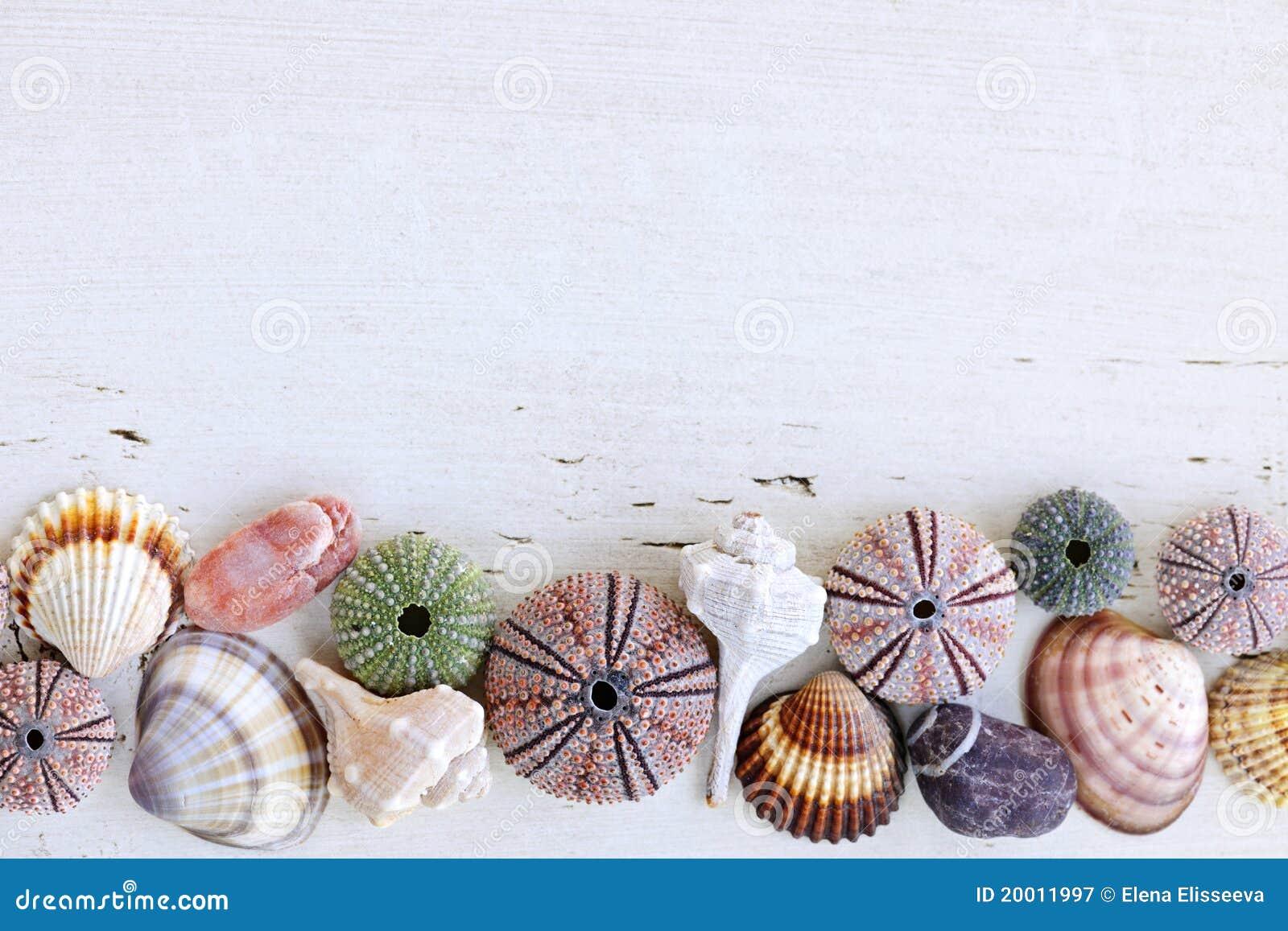 Fundo com seashells