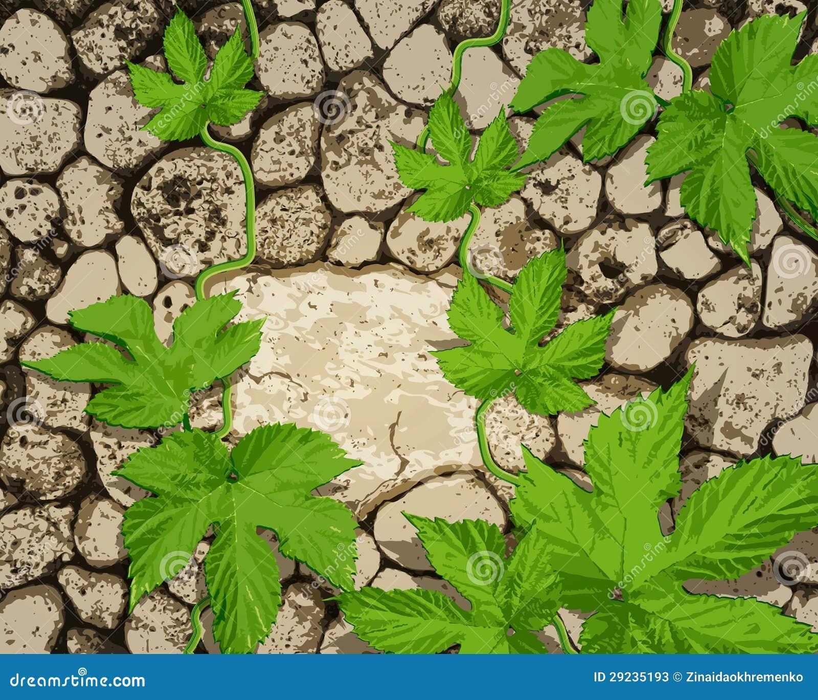 Download Fundo Com Stonework, Uma Planta Do Rastejamento Ilustração do Vetor - Ilustração de tijolos, marrom: 29235193