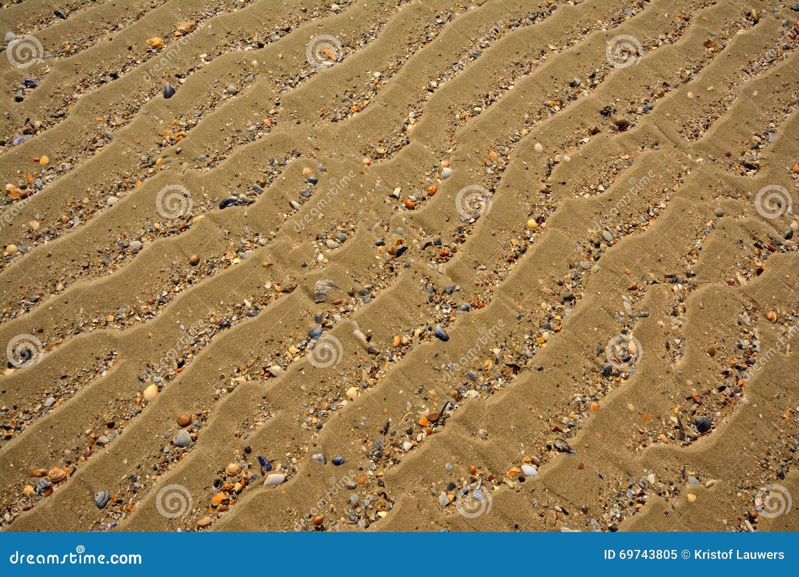 Fundo da areia ondulada com shell quebrados, ângulo diagonal