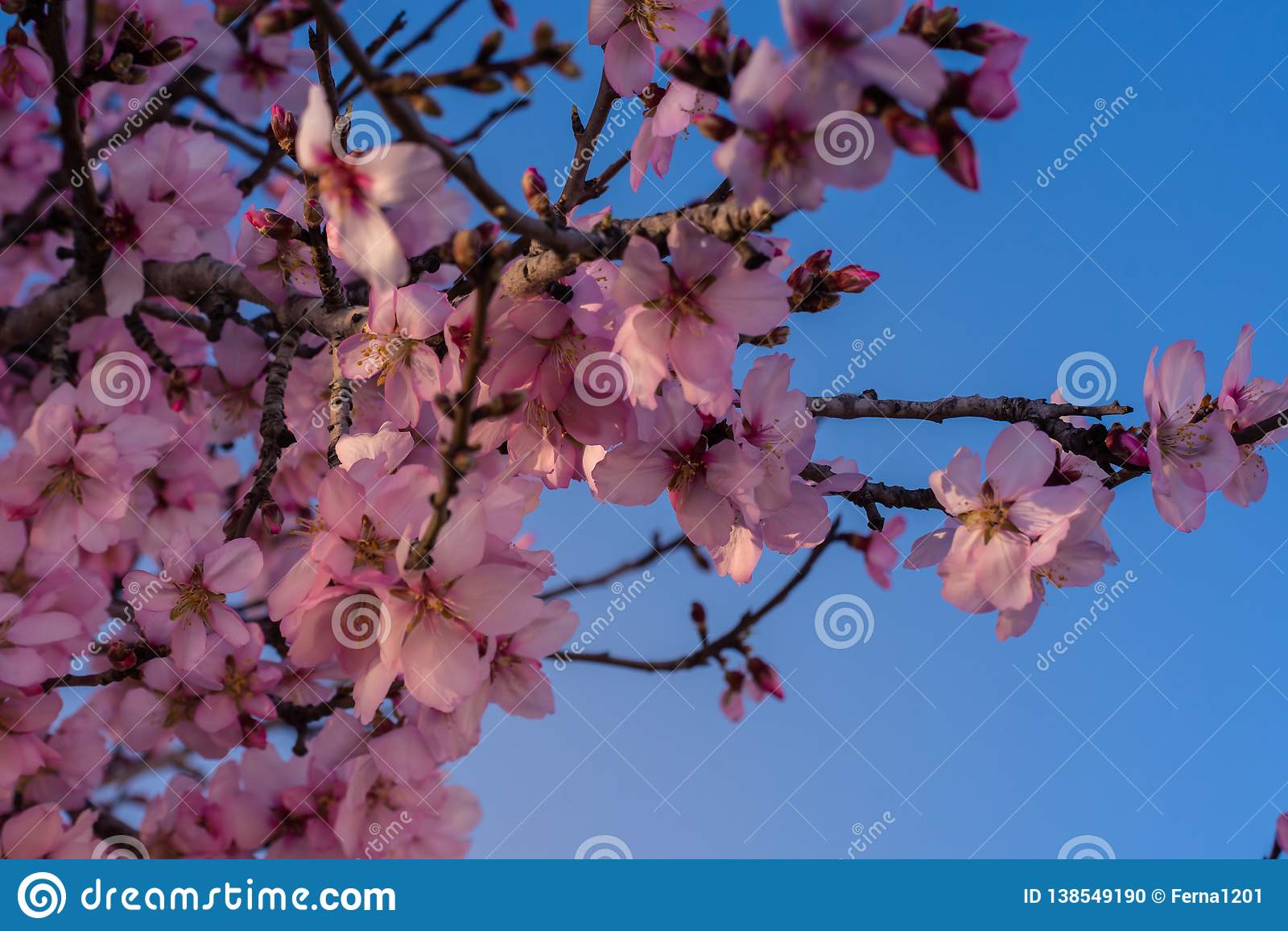 Fundo da flor da mola A cena bonita da natureza com árvore de florescência e o sol alargam-se Dia ensolarado Apenas chovido sobre