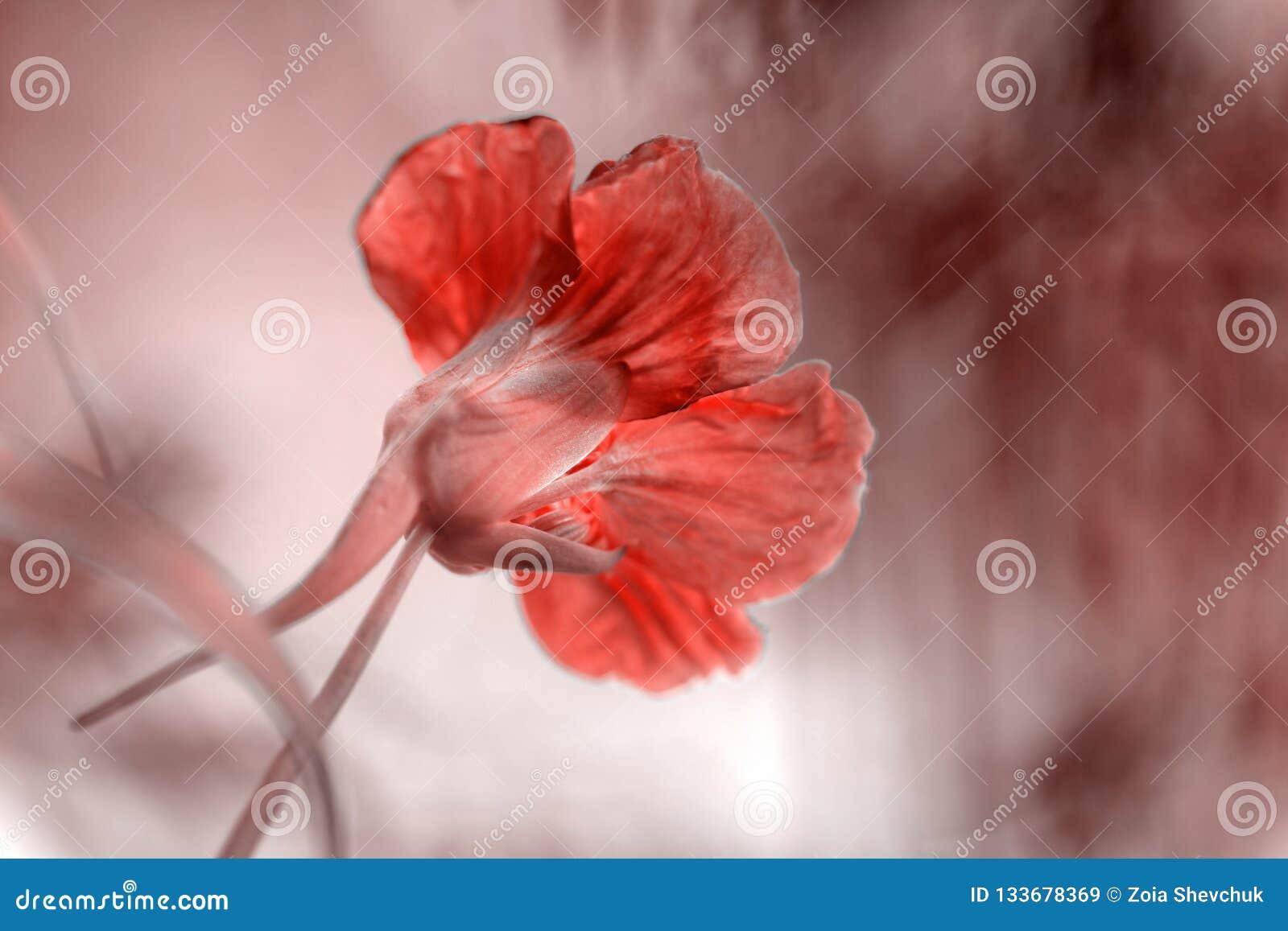 Fundo da flor na cor do ano 2019 Pantone - coral de vida