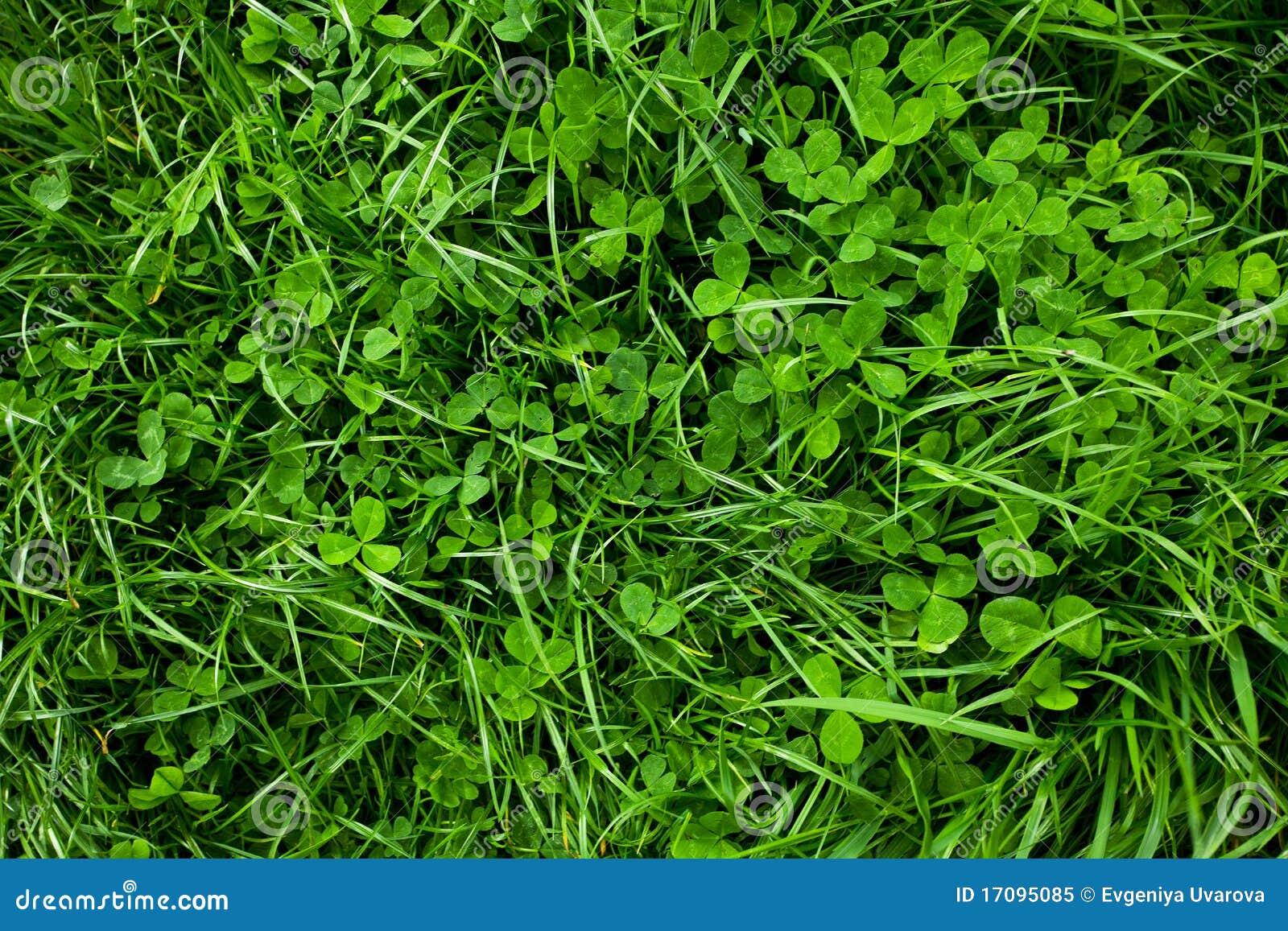 Fundo da grama verde