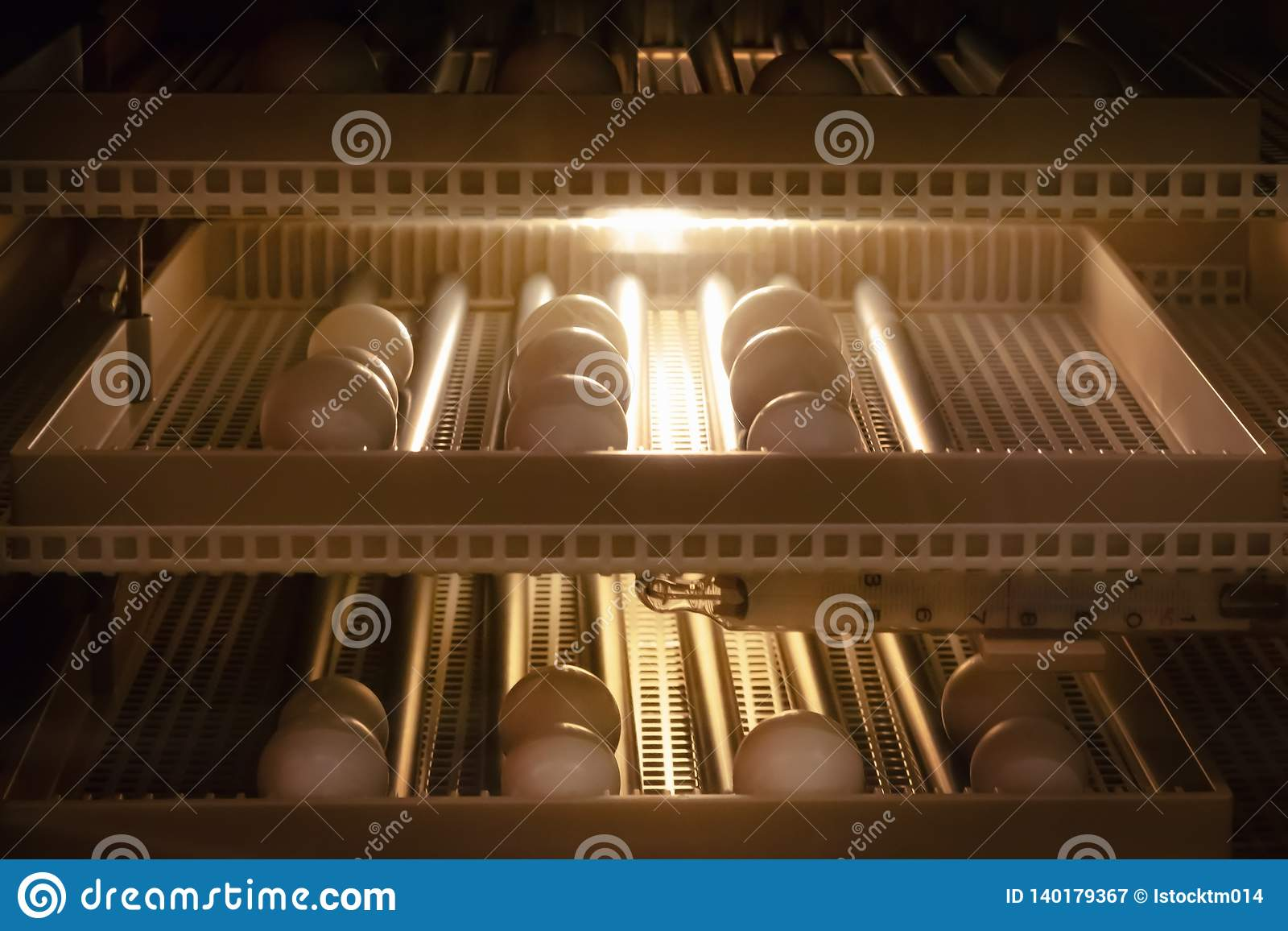 Fundo da máquina da incubadora do ovo Ovo do pássaro com choque na exploração agrícola