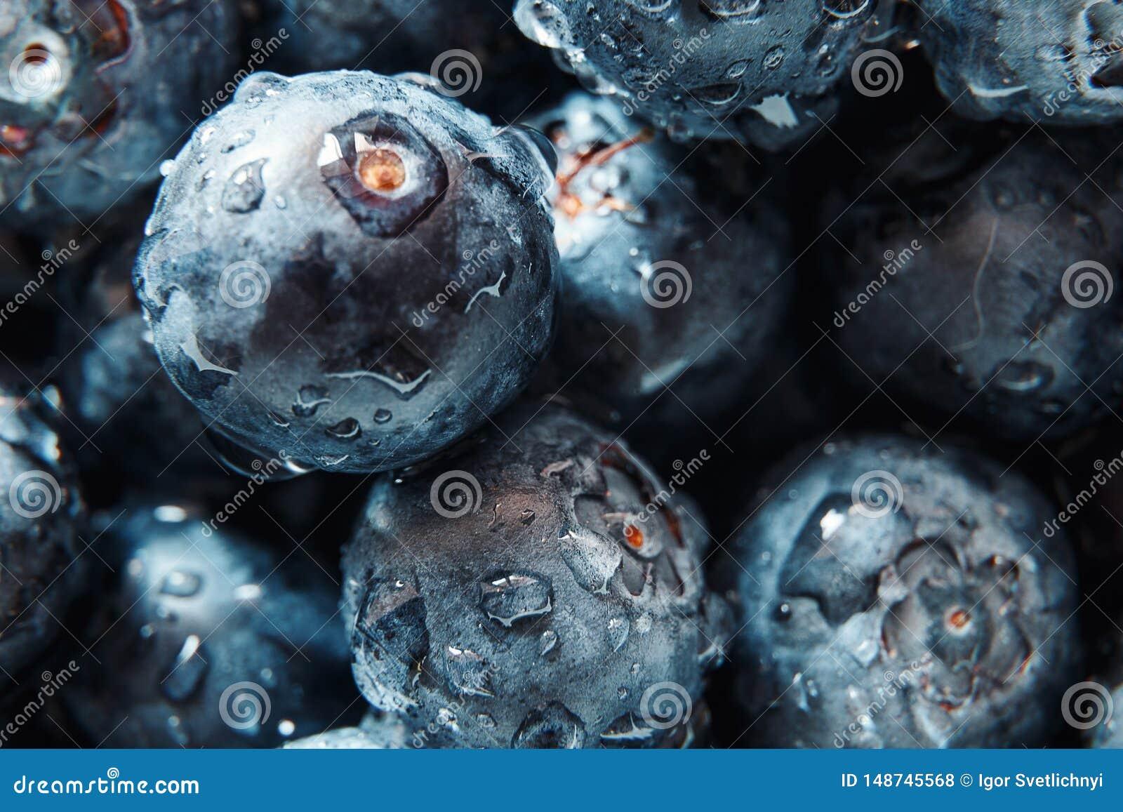 Fundo da natureza Gotas bonitas grandes da ?gua no close up escolhido fresco maduro e suculento dos mirtilos Ideia macro do tex a