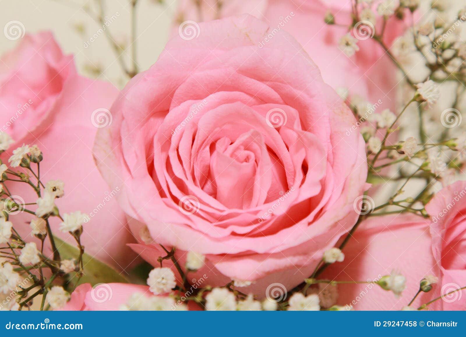 Download Fundo da rosa do rosa foto de stock. Imagem de feminine - 29247458