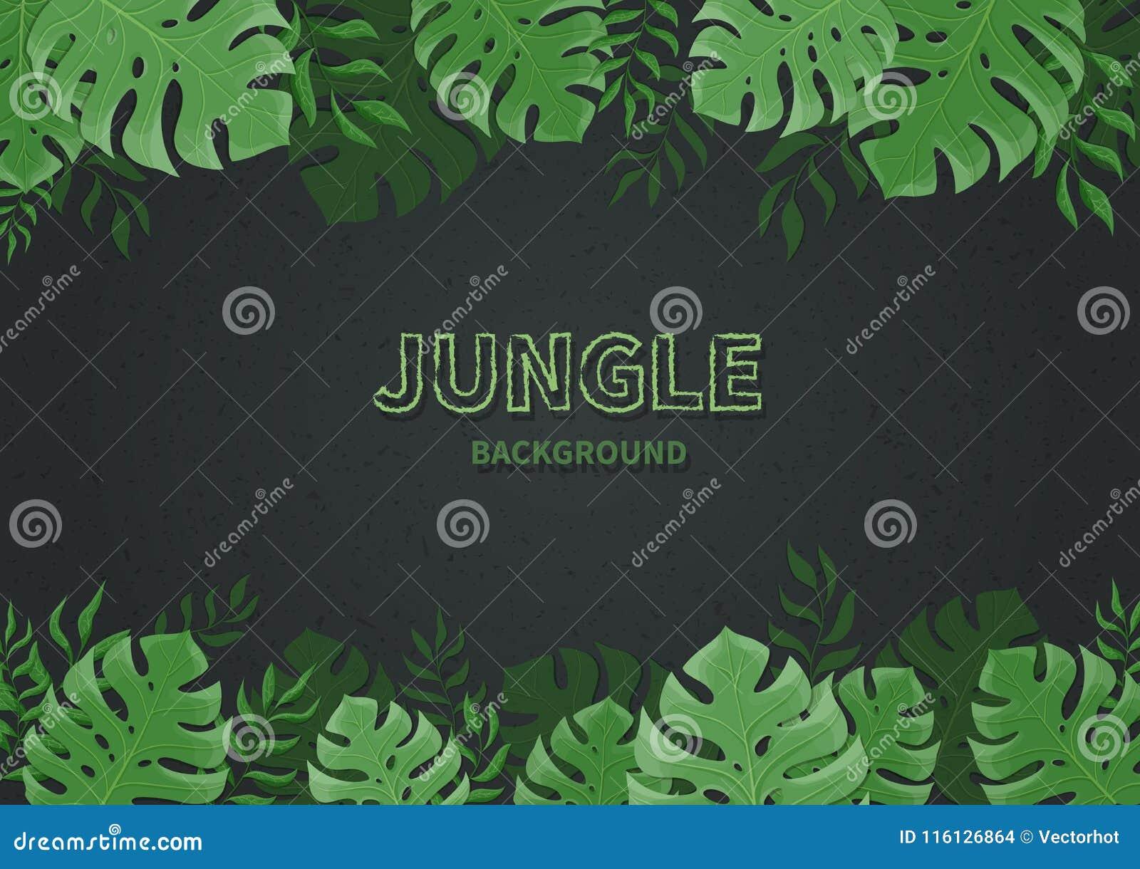 Fundo da selva Folhas de palmeira tropicas, ramos em um fundo preto Folha verde do monstera Espaço do texto