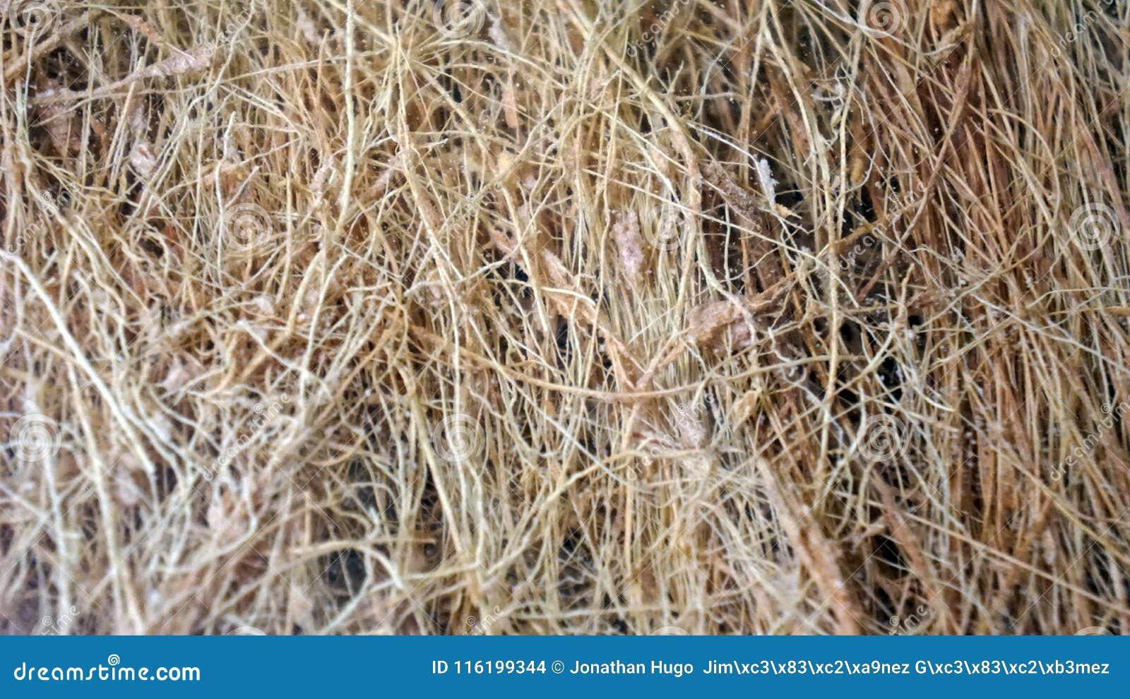 Fundo da textura das fibras vegetais