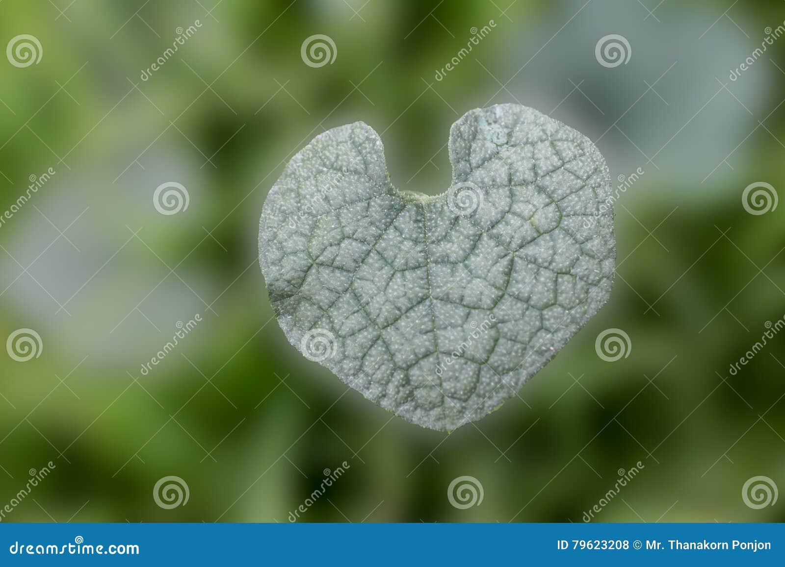 Fundo dado forma coração da folha