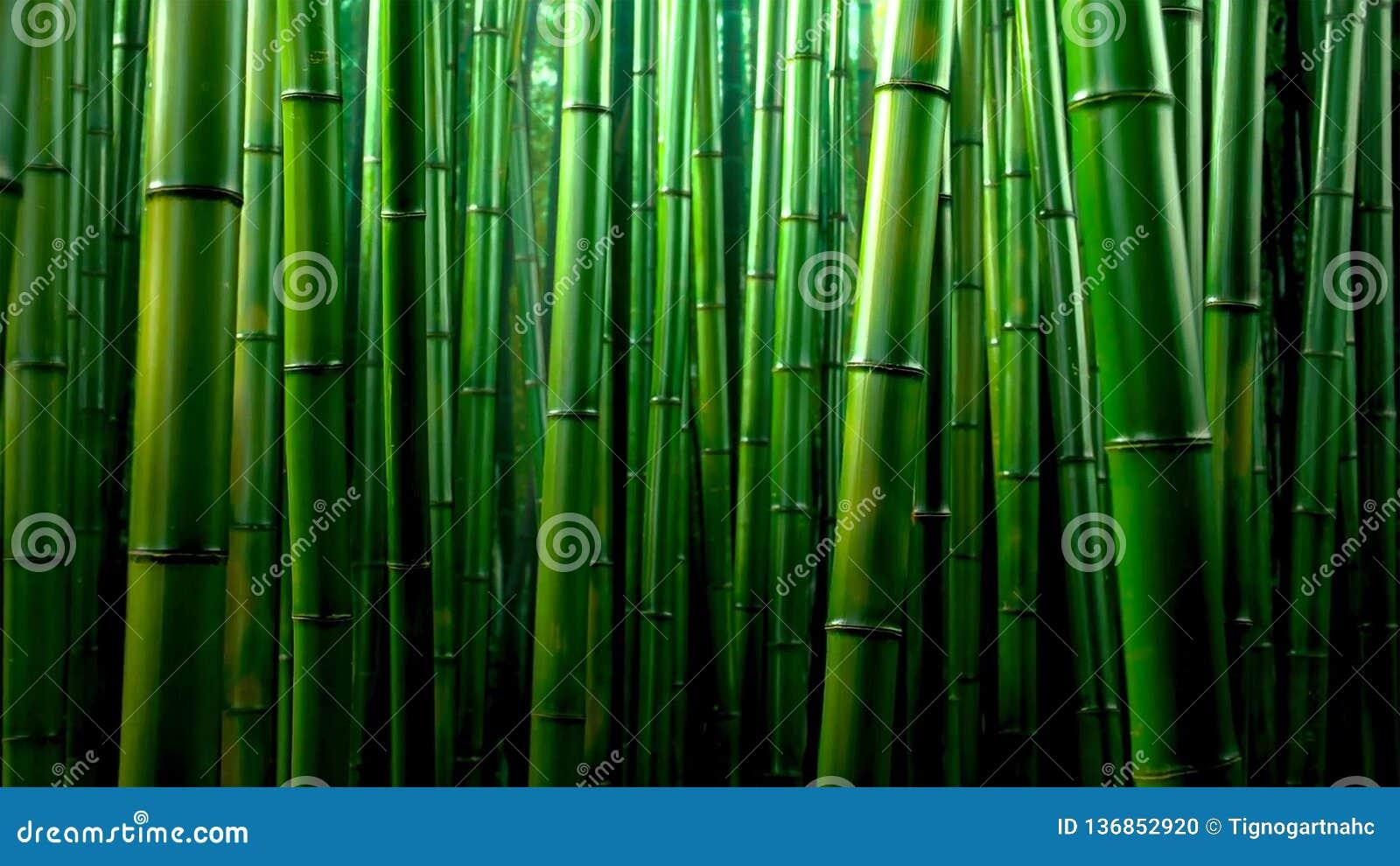 Fundo de bambu verde da textura da floresta, panorama de bambu da textura