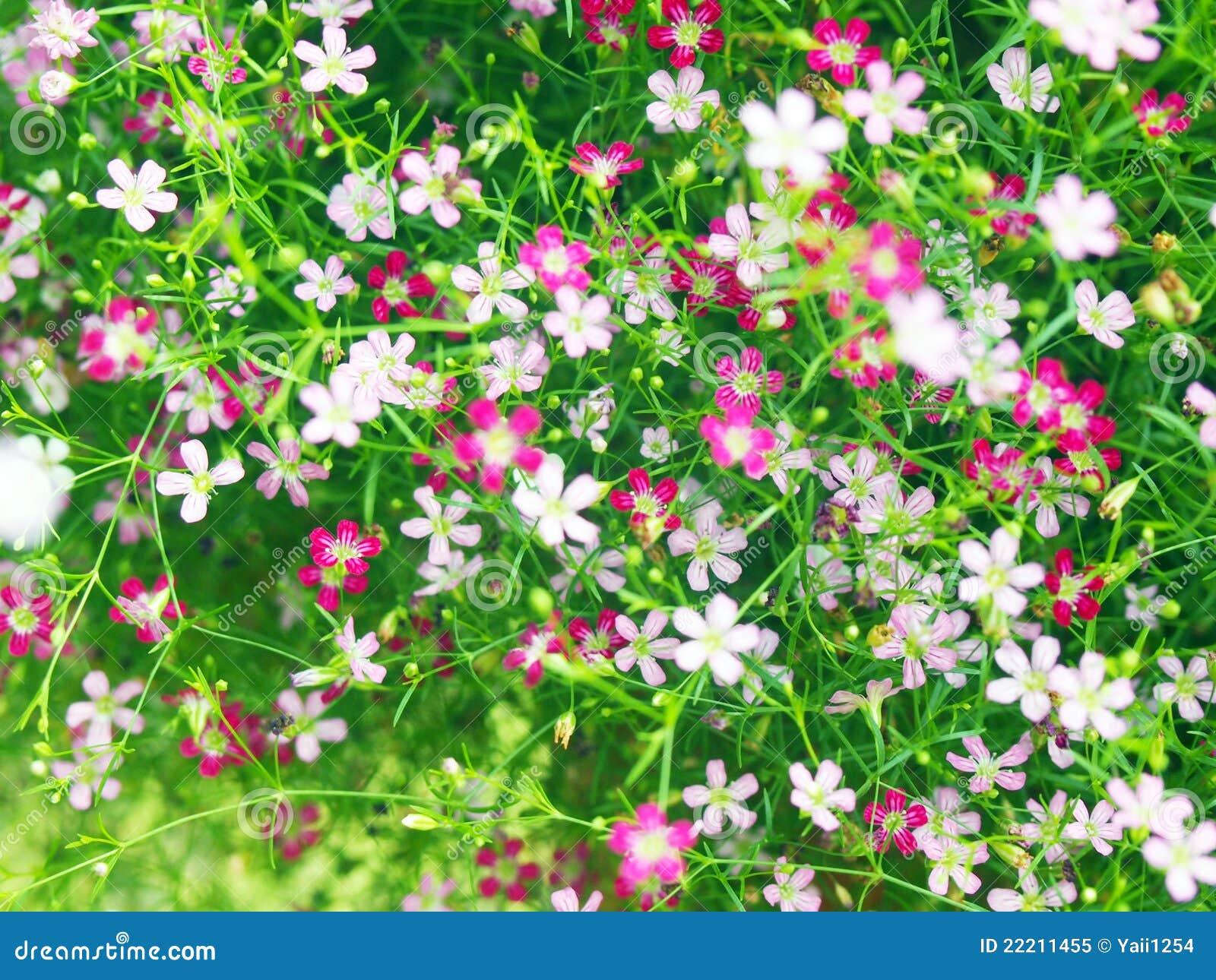 Fundo De Flores Pequenas Foto De Stock Royalty Free