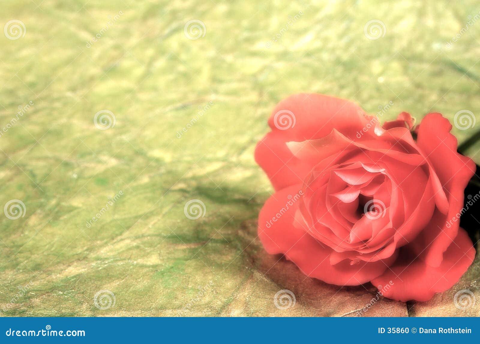 Fundo de Rosa