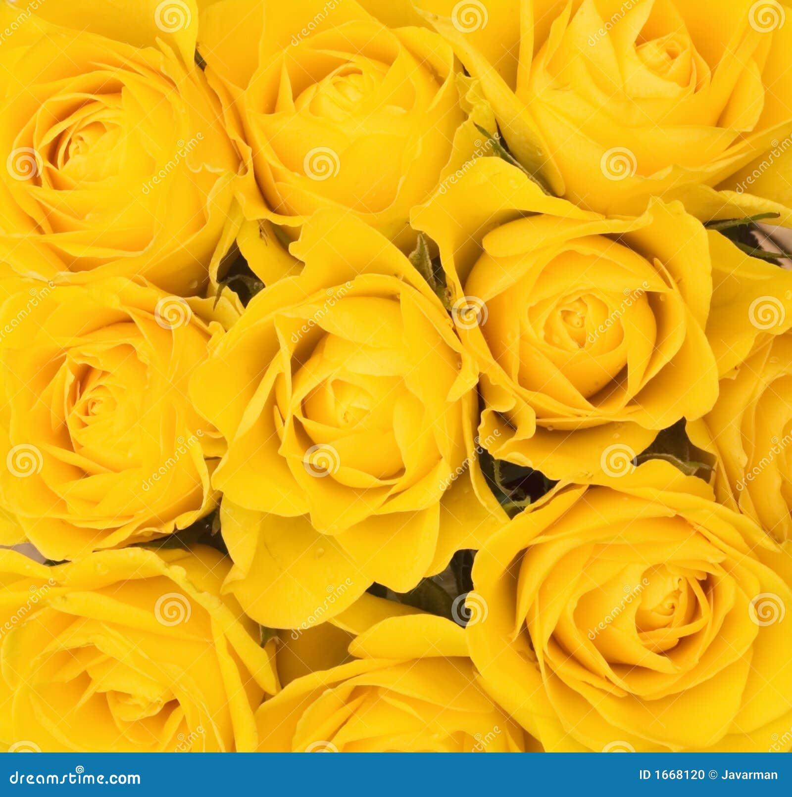 c7892889b Fundo de rosas amarelas foto de stock. Imagem de macro - 1668120